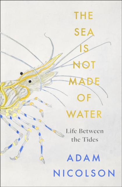 The Sea is Not Made of Water: Life Between the Tides by Adam Nicolson | 9780008294779